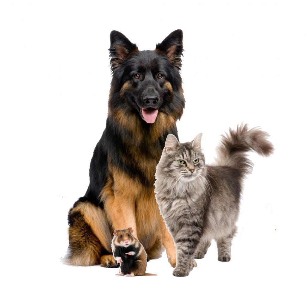 Kleintiere (Hund, Katze, Hamster)